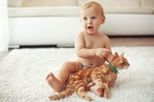 7 Things Your Toddler Thinks About Your Cat