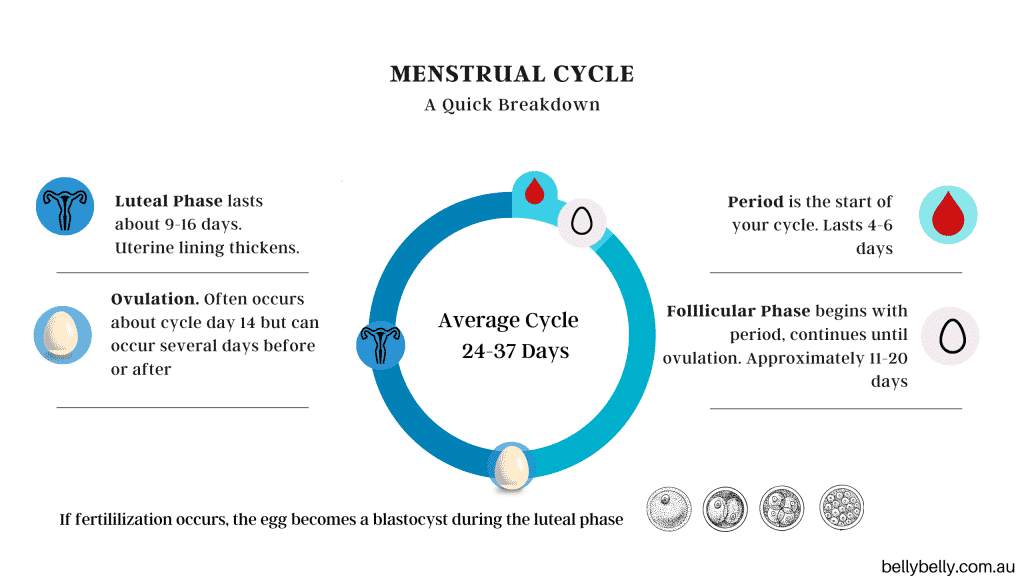Menstrual Cycle Chart and luteal phase